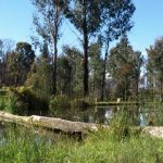 Marysville Trout and Salmon Ponds